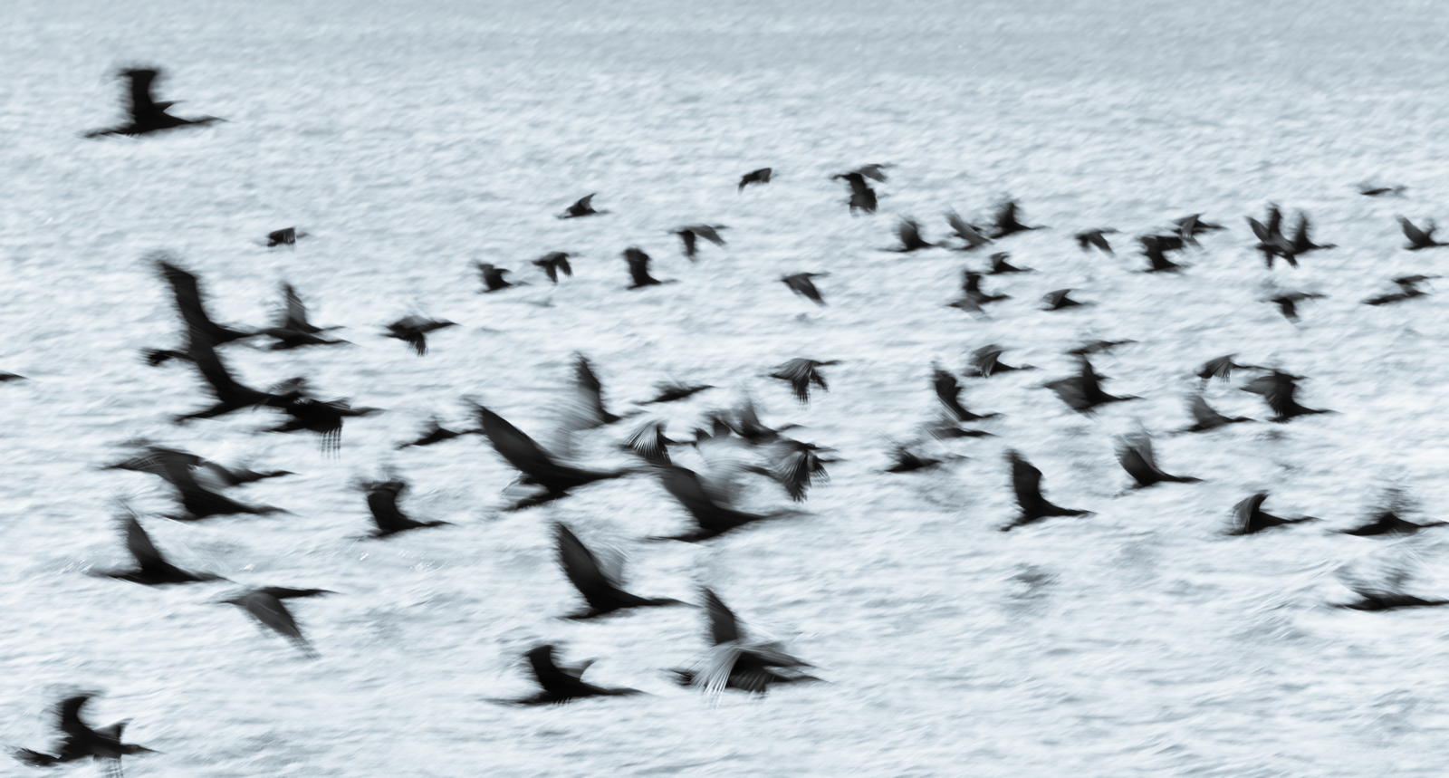 blurred image of flock of birds flying away